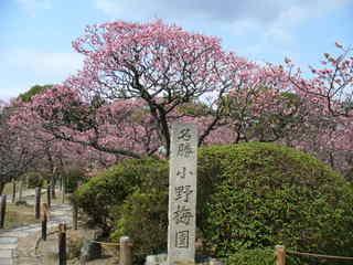 小野梅園.JPG