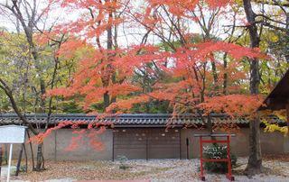 河合神社の紅葉.JPG