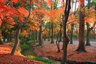 糺の森紅葉2.jpg