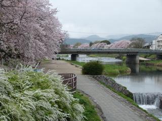 0001出町橋から葵橋を見る.JPG