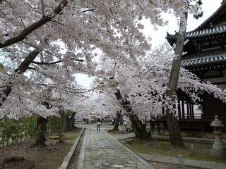 立本寺 (4)_R.JPG