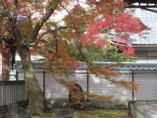 紅葉の本満寺.JPG